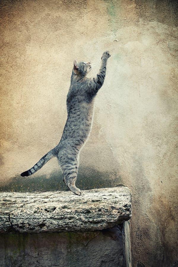 常设猫 免版税库存图片