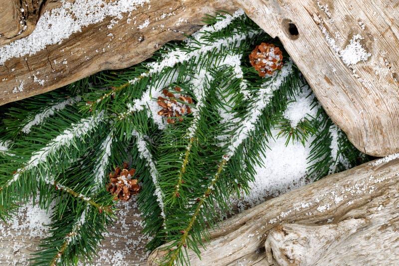 常青用雪盖的分支和土气漂流木头 库存图片