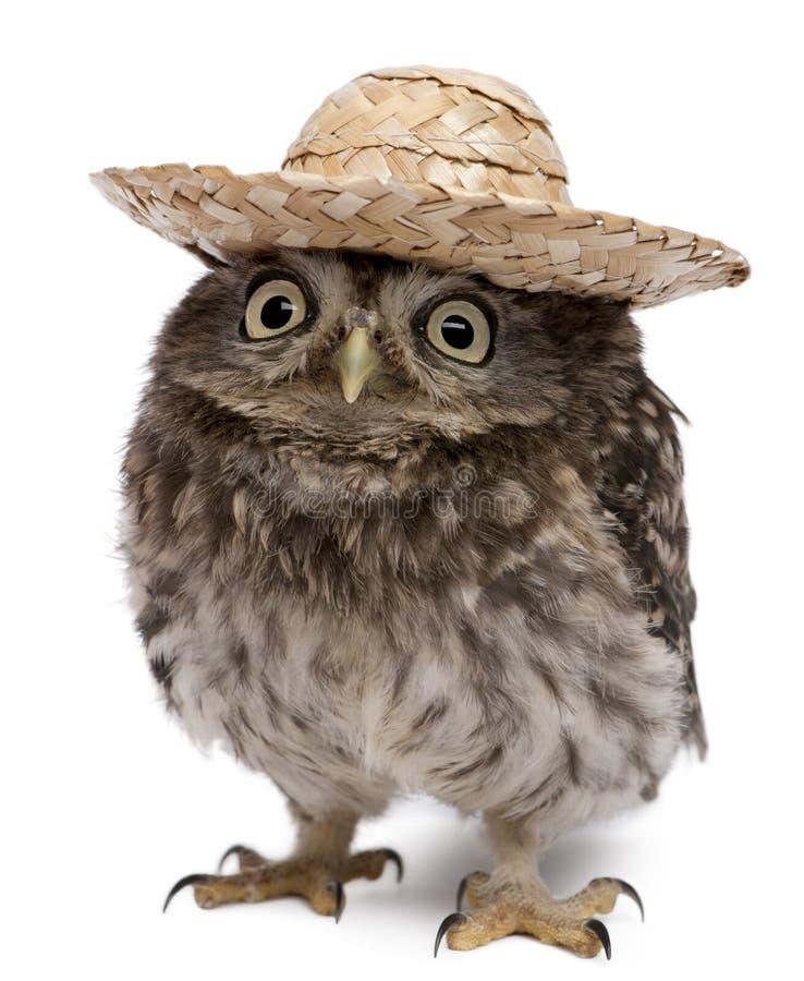 帽子猫头鹰佩带的年轻人 免版税库存照片