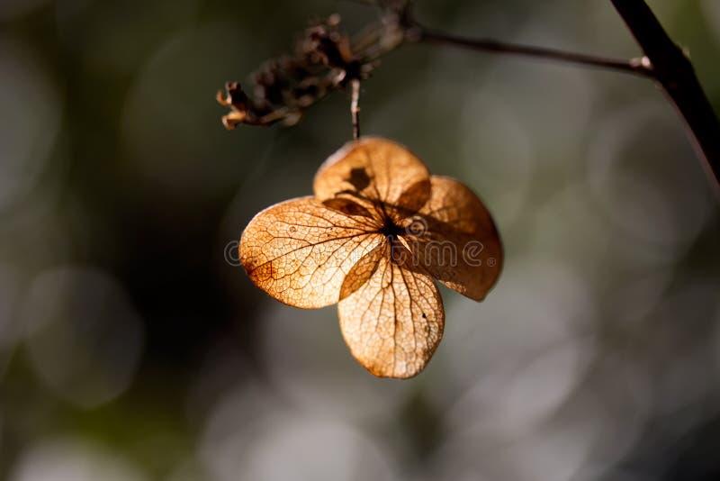 Download 干叶子瓣在阳光下 库存照片. 图片 包括有 叶子, 自治权, 宏指令, 烘干, 阳光, 结构树, 重点, 森林 - 30335038