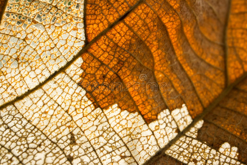从干叶子的木浆 图库摄影
