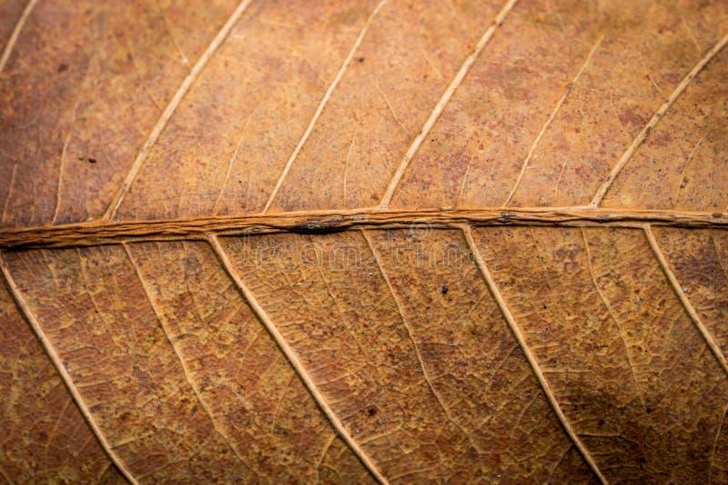 干叶子纹理和背景 免版税库存图片