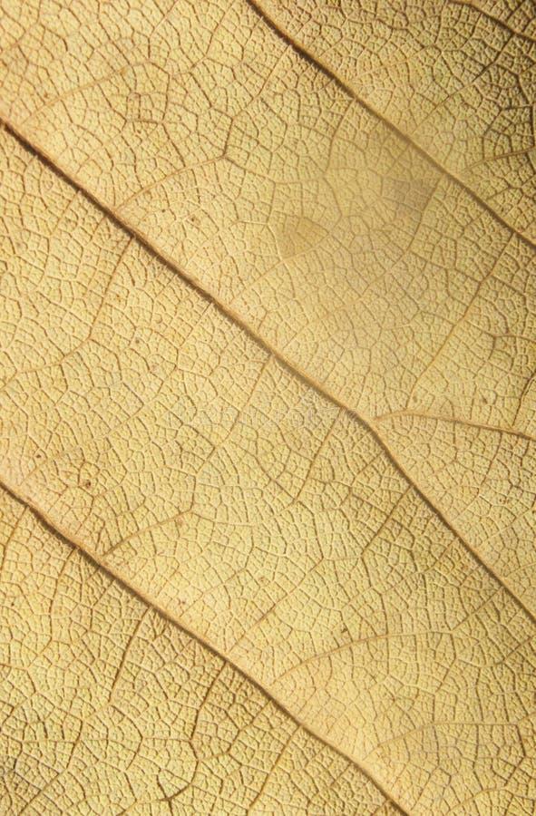 干叶子纹理 库存图片