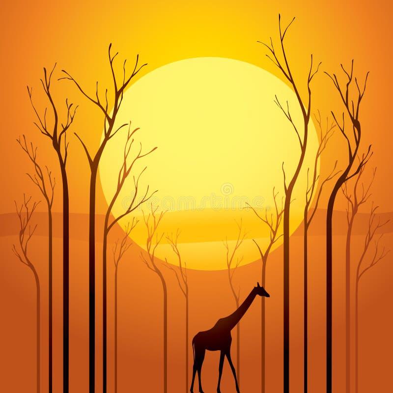 干日落结构树