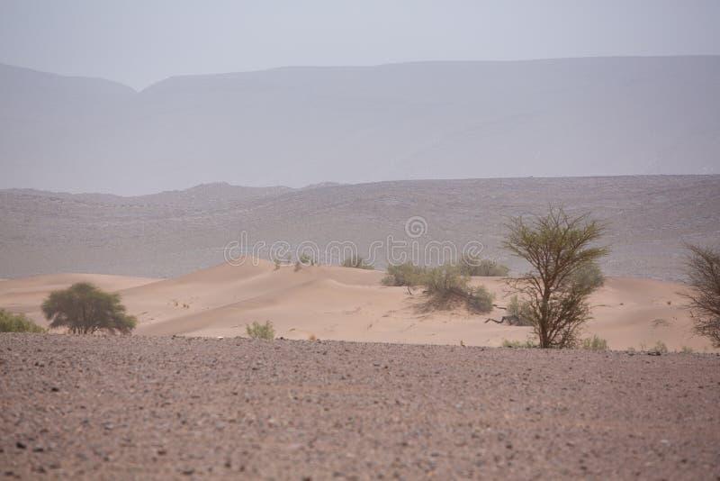 干旱和热的天在撒哈拉大沙漠,陶陶的沙漠 库存图片