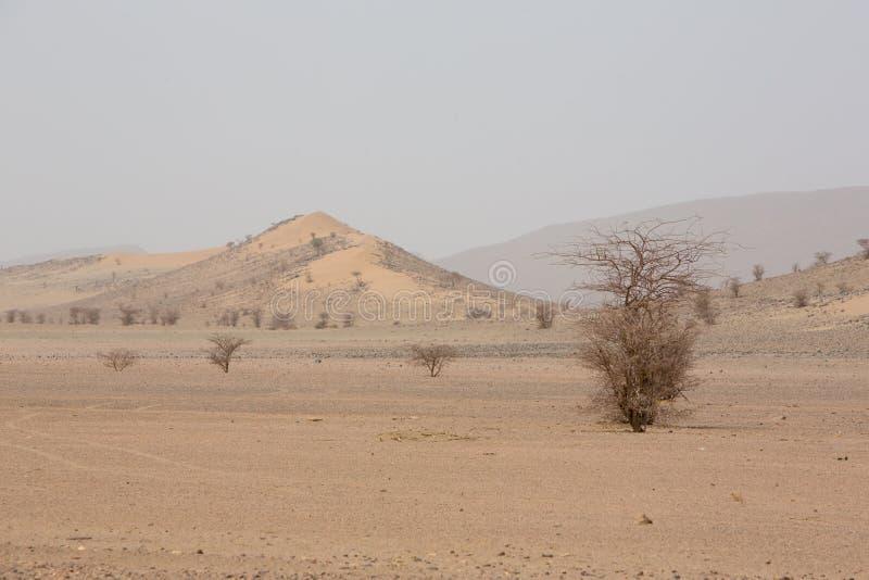干旱和热的天在撒哈拉大沙漠,陶陶的沙漠 库存照片