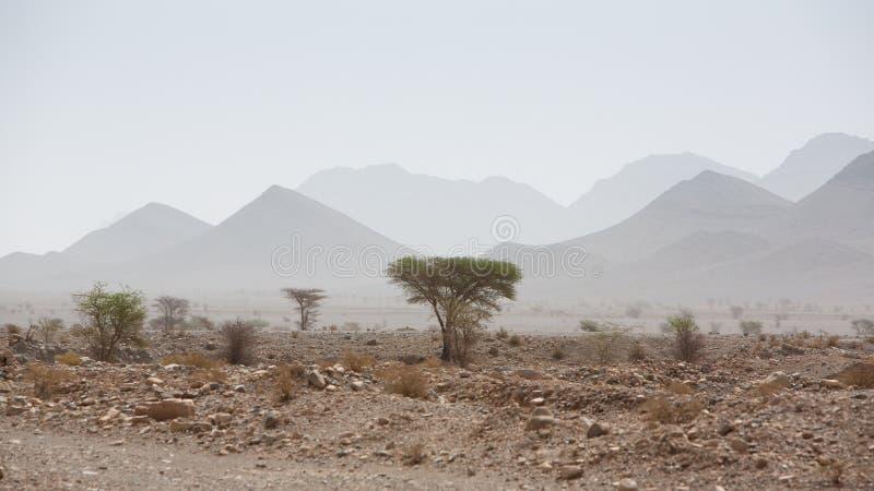干旱和热的天在撒哈拉大沙漠,陶陶的沙漠 免版税库存照片