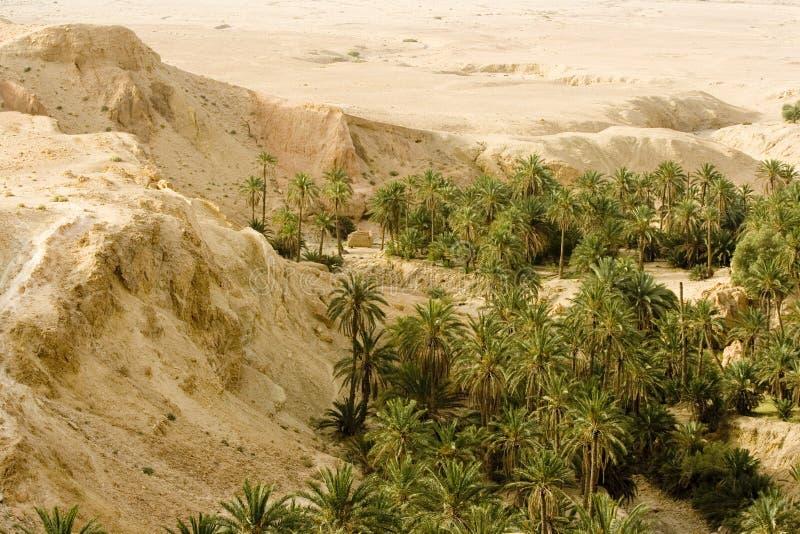 干旱的横向 免版税库存照片