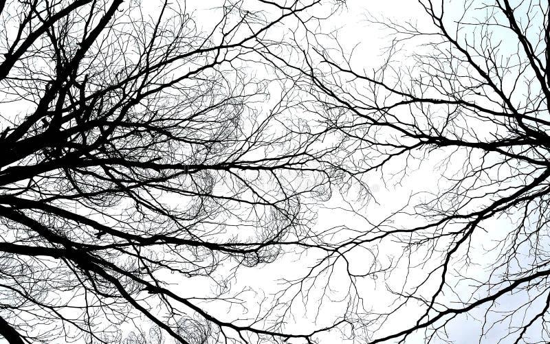干树早午餐, Abatract背景 免版税图库摄影