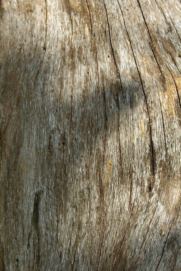 干树词根纹理背景 免版税图库摄影