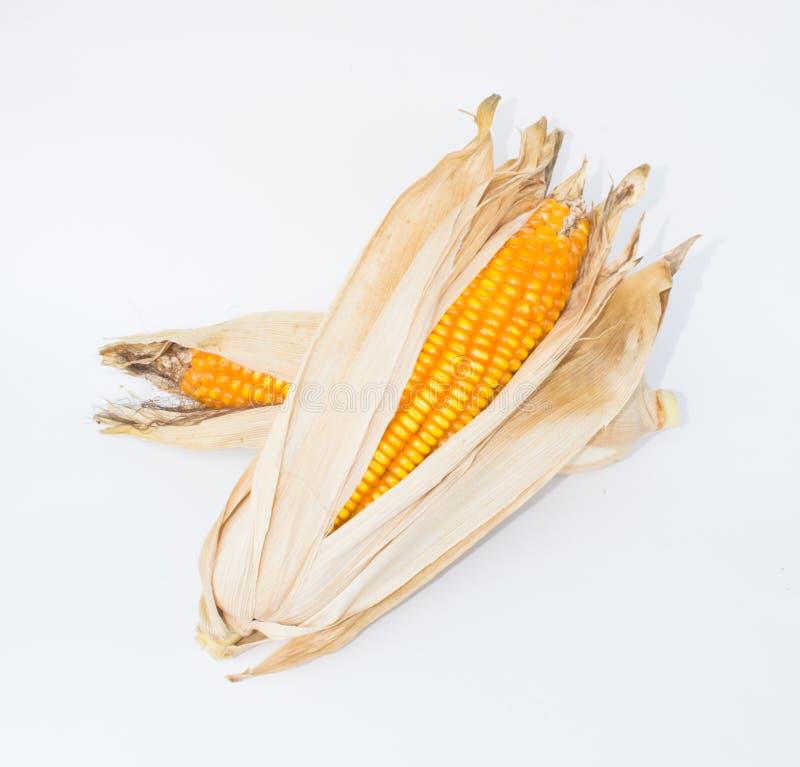 干棕色玉米 图库摄影