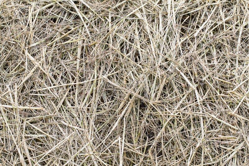 干棕色草在地板留下纹理背景 库存图片