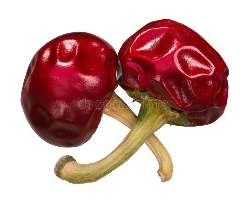 干樱桃胡椒粉,上面 免版税库存照片