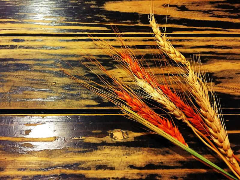 干橙色和黄色米 库存照片
