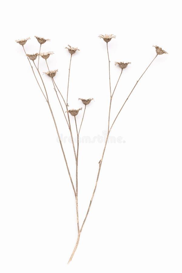 干灌木的抽象棕色枝杈 库存图片