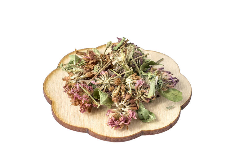 干燥三叶草为在白色背景的有用的清凉茶开花 免版税库存照片