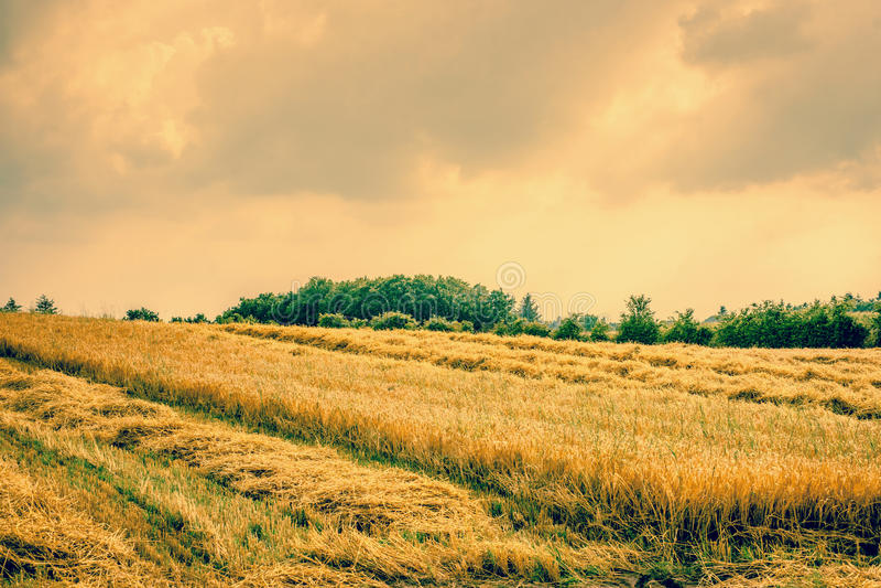 干燥农业领域风景 免版税库存图片