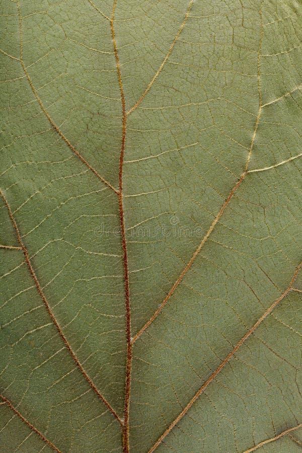干燥叶子植物宏观纹理背景的 平的干燥标本集细节 库存图片