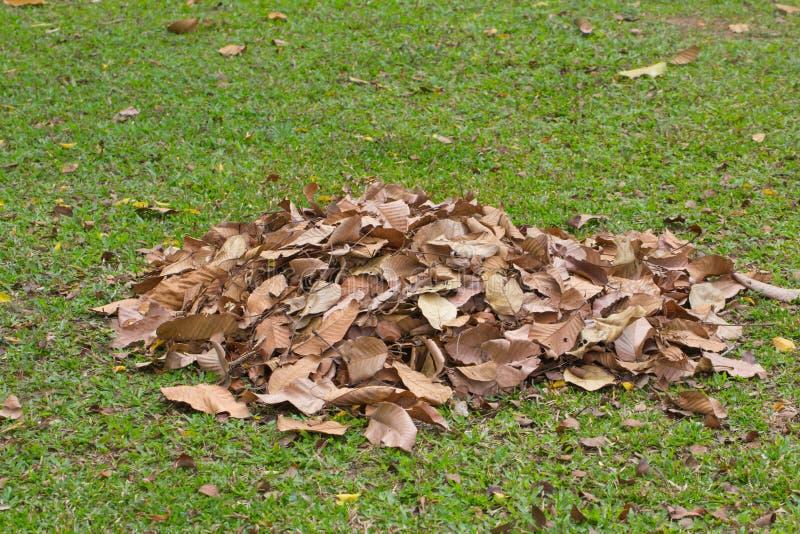 干燥叶子横扫,清洗的庭院 库存照片
