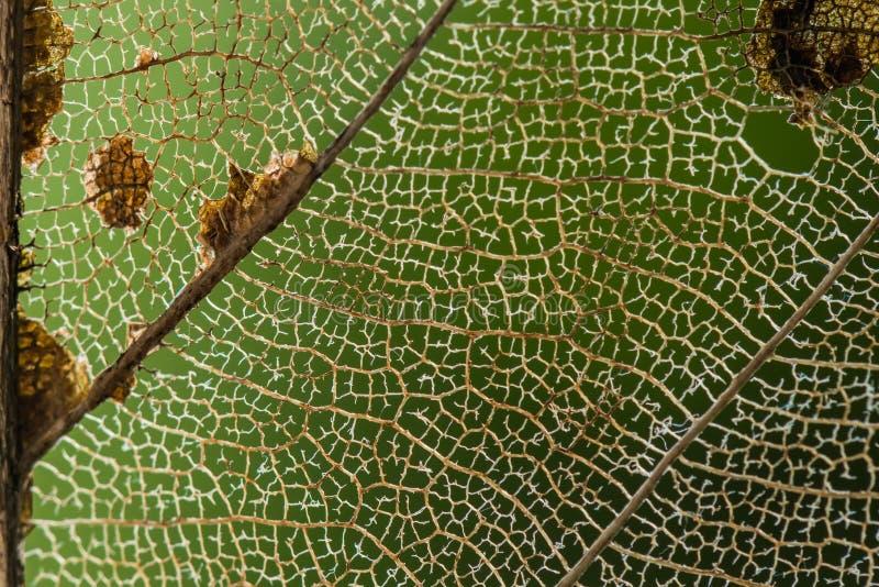 干燥叶子纤维背景纹理 库存照片