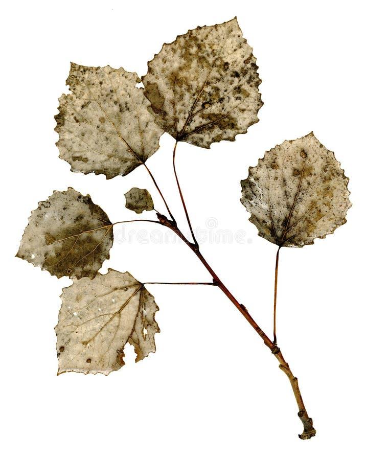 干燥叶子结构 库存照片