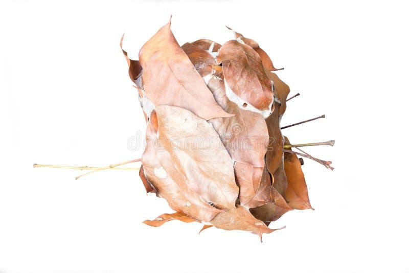 干燥叶子蚂蚁巢在顶面木头的 免版税库存图片