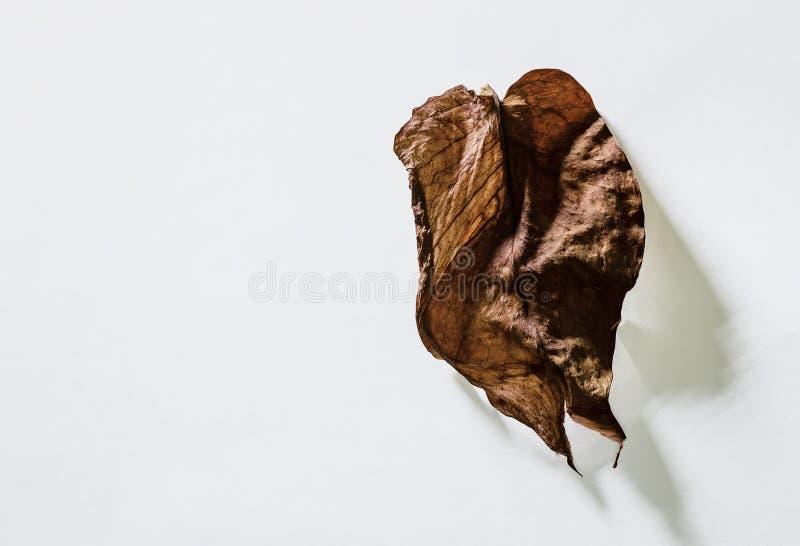 干燥叶子 库存图片