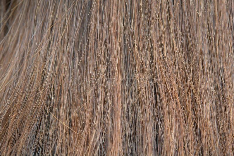 干燥和损坏的头发 免版税库存照片