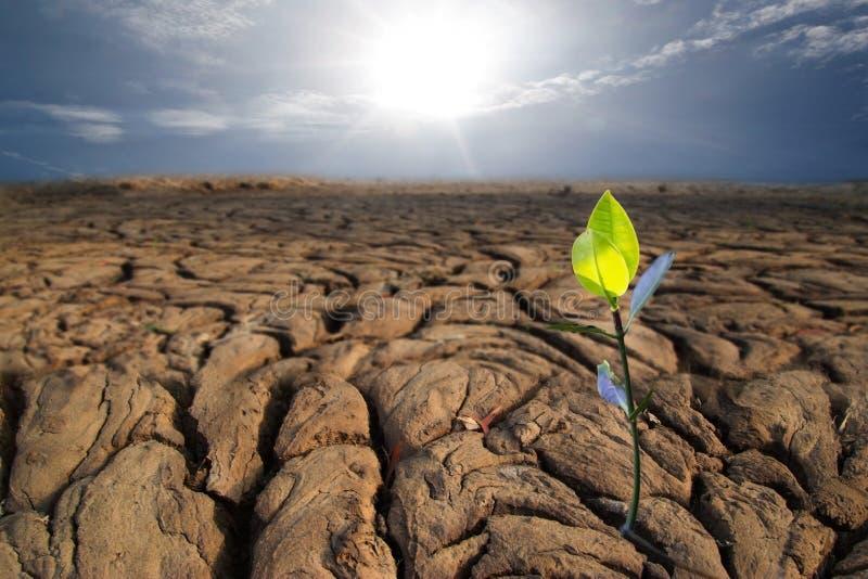 干燥地球纹理的年幼植物在泰国 免版税图库摄影