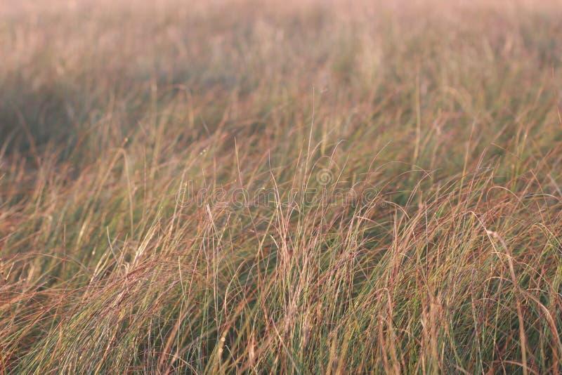 干燥域草 干草原 库存图片