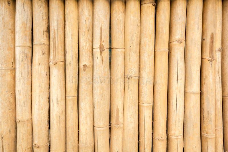 干燥布朗竹子纹理 库存图片