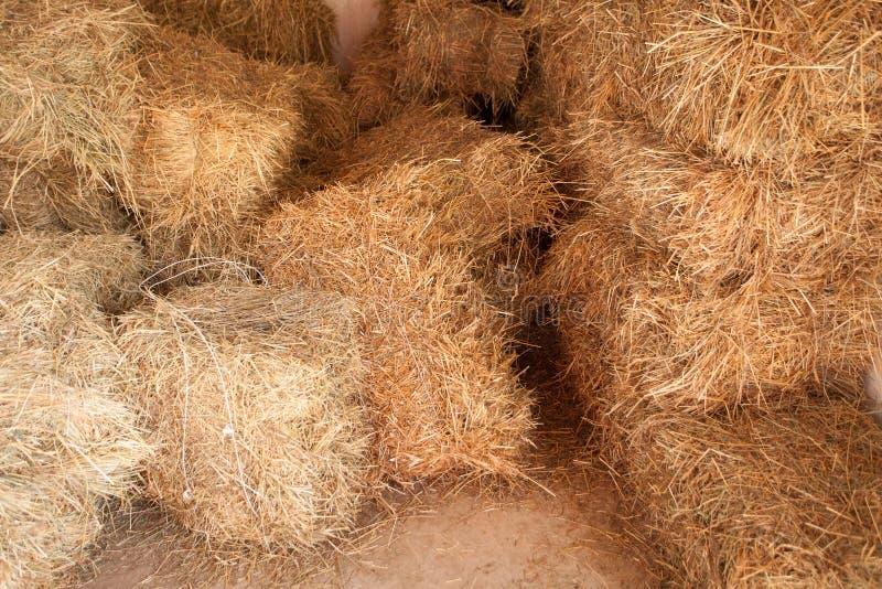 干燥干草堆,在谷仓里面 免版税库存照片
