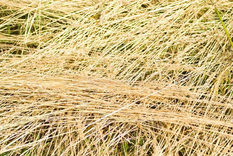 干燥干草 免版税图库摄影