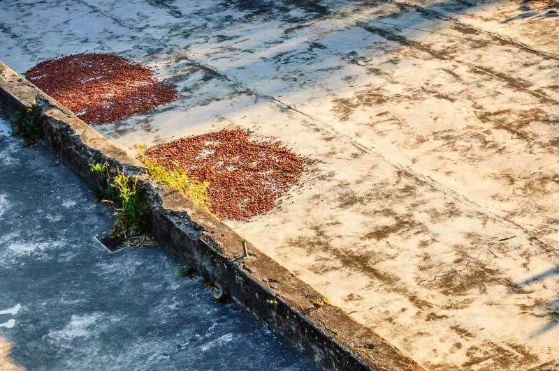 干燥恶豆在危地马拉 库存图片