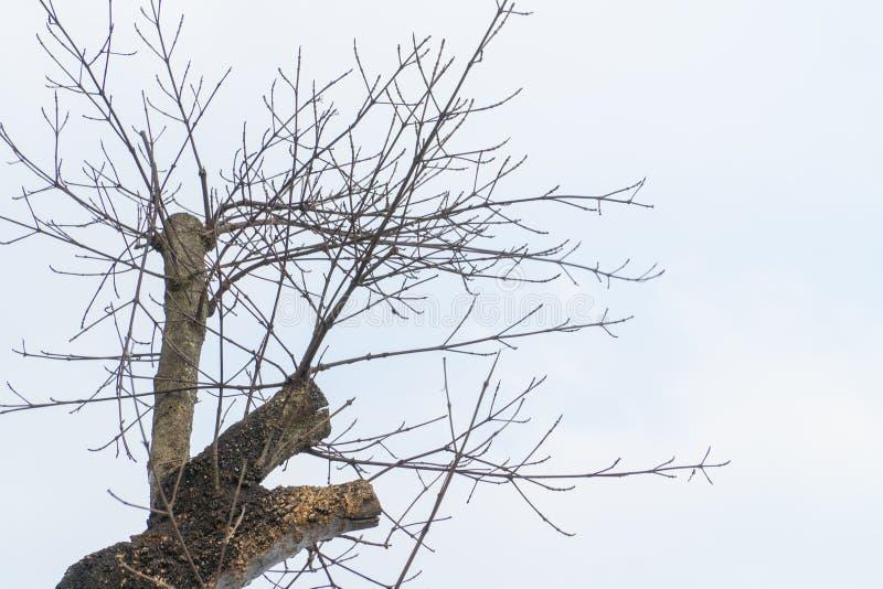 干燥木头顶面树与天空蔚蓝的 免版税库存图片