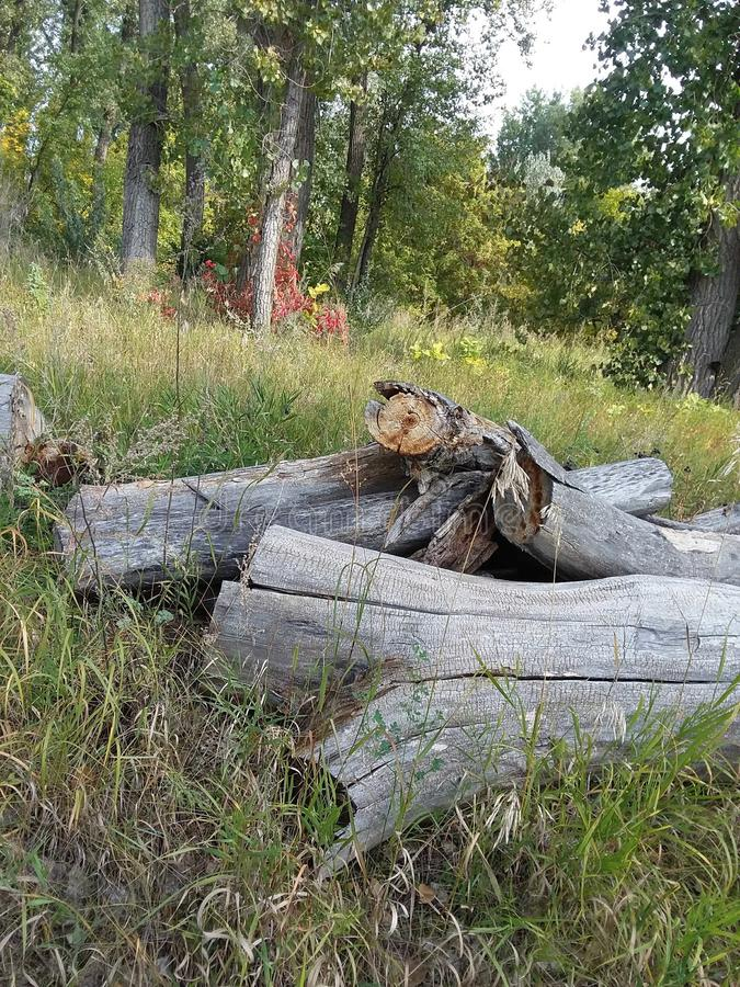 干燥木头 免版税库存图片