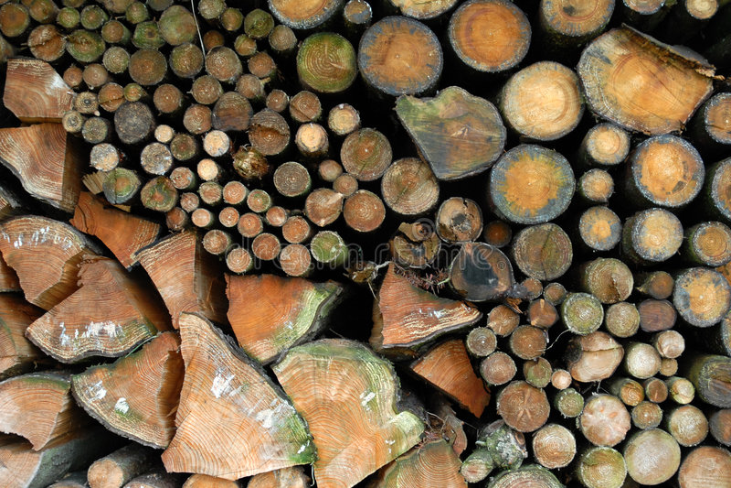 干燥木柴 库存照片