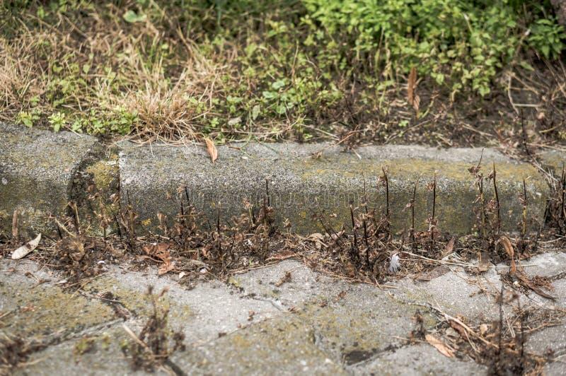干燥杂草和边路 免版税图库摄影