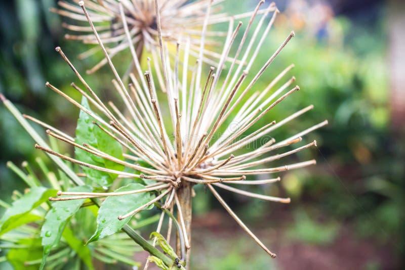 干燥枝杈 免版税库存图片