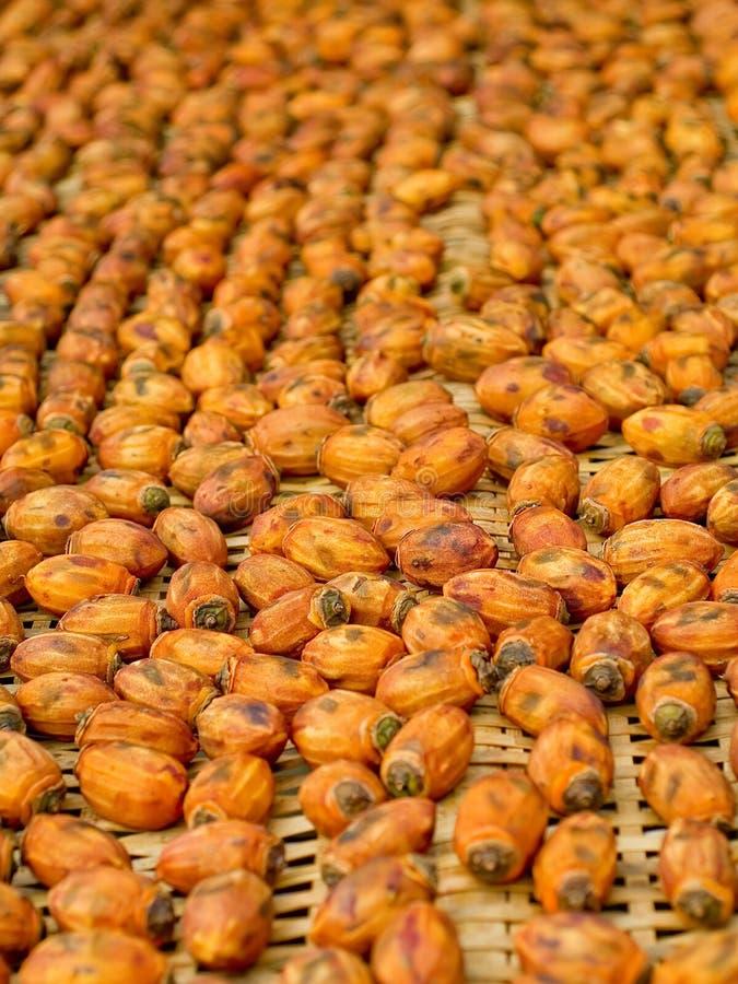 干燥柿子 免版税库存照片
