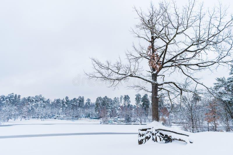 干燥树、结冰的湖和积雪的树在冬天停放 免版税库存照片