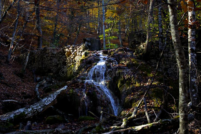 干燥树、绿色青苔和清楚的水稀薄的小河在瀑布的 免版税库存照片