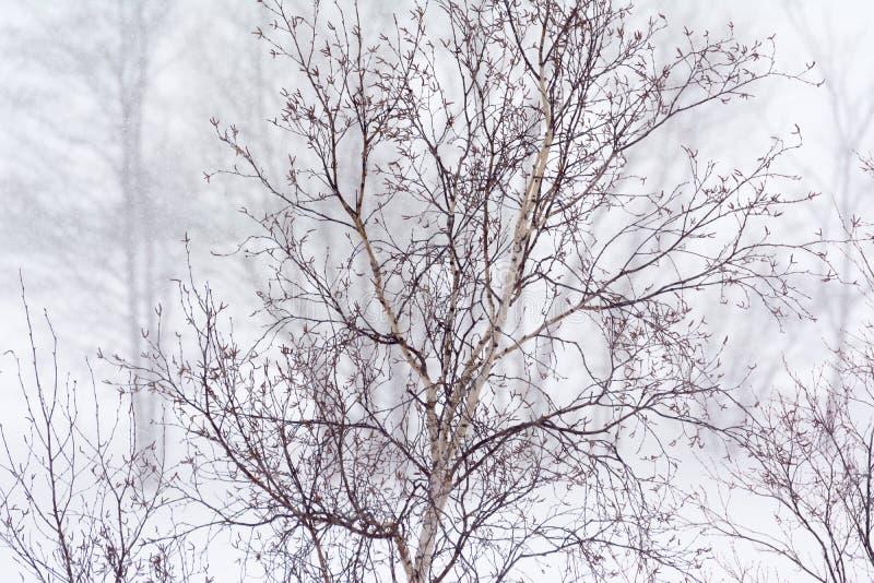 干燥树在冬天 免版税库存图片