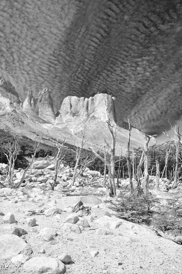 干燥树在托里斯del潘恩国家公园, Cuernos,巴塔哥尼亚,智利 免版税库存照片