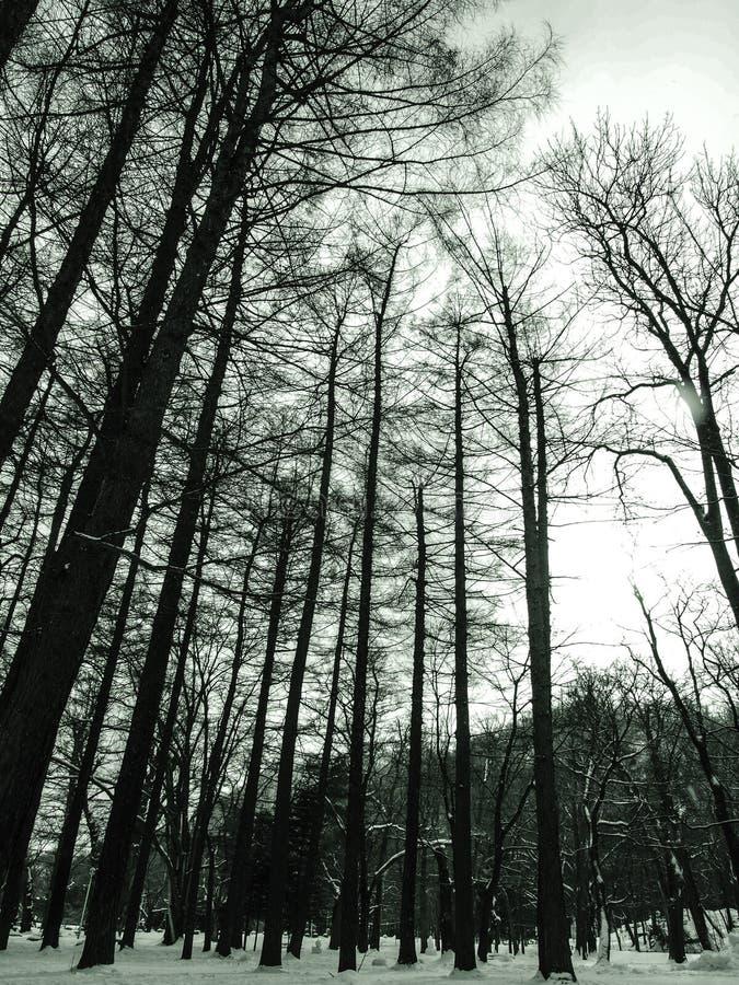 干燥树在雪的冬天 免版税库存照片