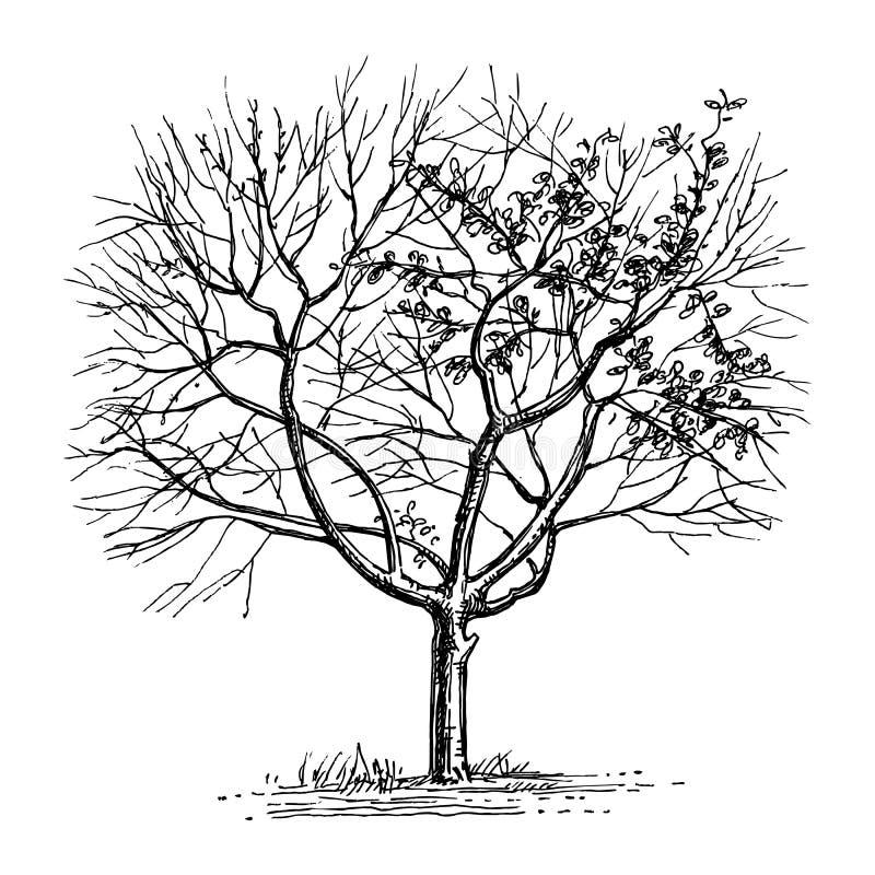 干燥树墨水剪影  皇族释放例证