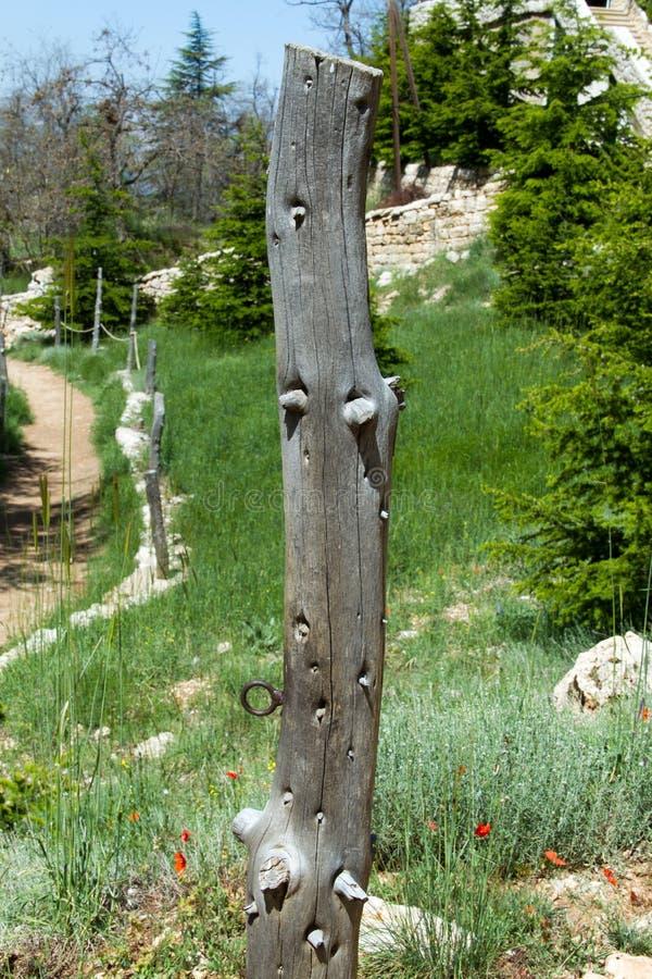 干燥树干在黎巴嫩的北部的arz森林里 图库摄影