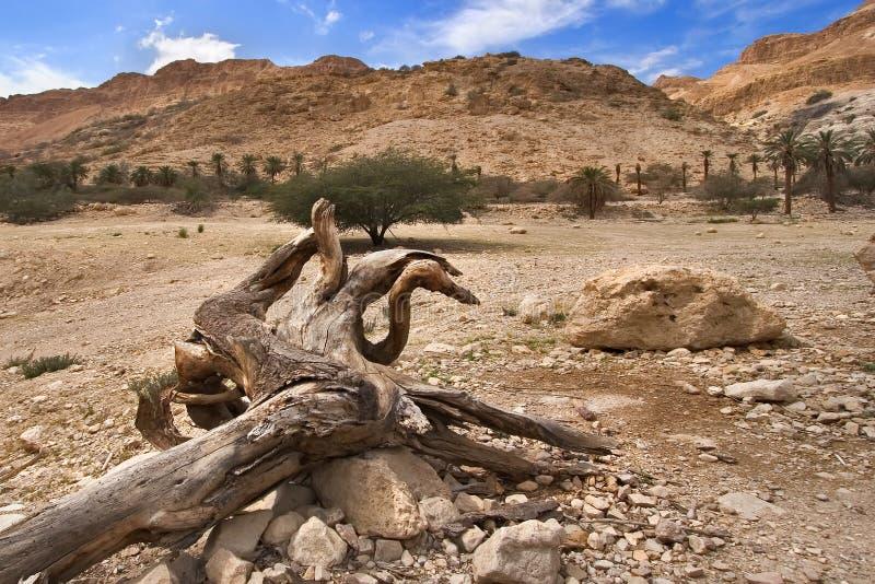 干燥树 库存照片
