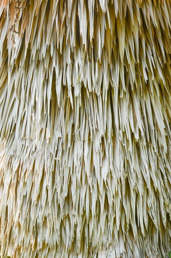 干燥棕榈叶背景 免版税库存照片