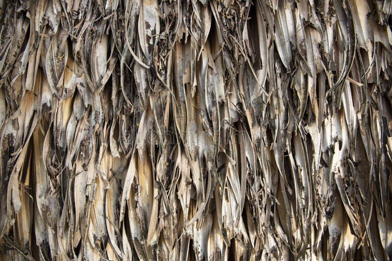 干燥棕榈叶表面特写镜头 茅屋顶照片纹理 干秸杆自然纹理  免版税库存图片